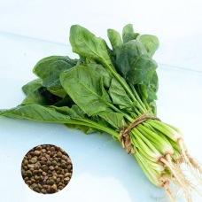 Leaf Vegetable Seeds